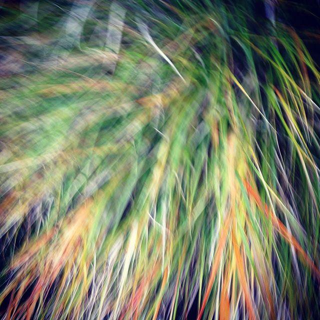 Grassy stuff