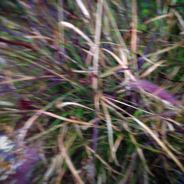 Grassy Stuff 42