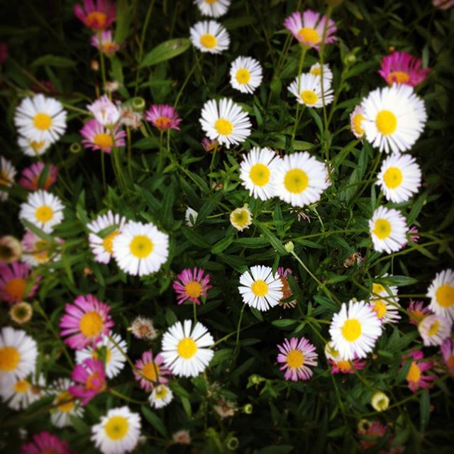 Mini daisies or something ...