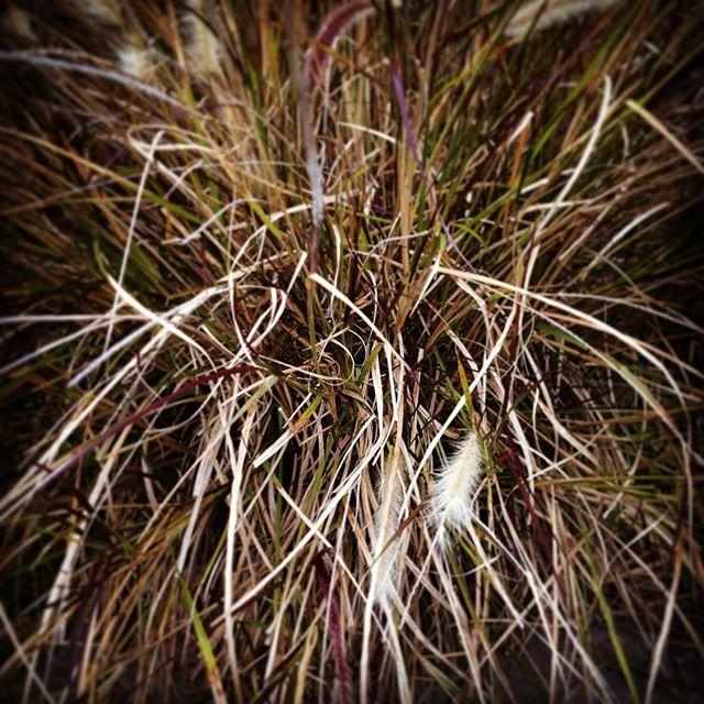 More grassy stuff.